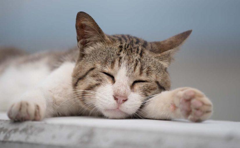 猫動画は虐待?エスカレートする猫動画の過剰演出